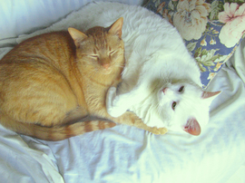 Catssleepingweb_2