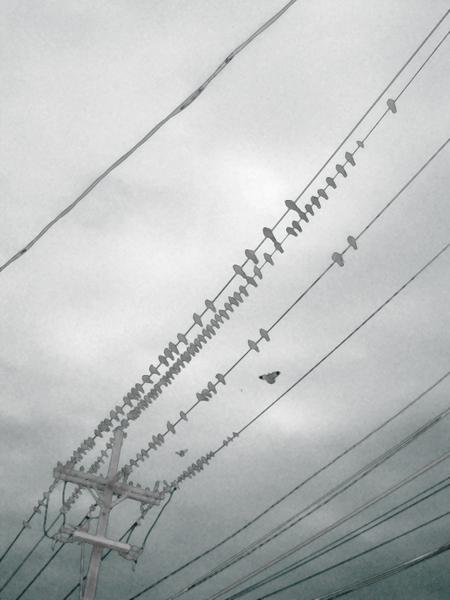 Birdsonwire00046_copy