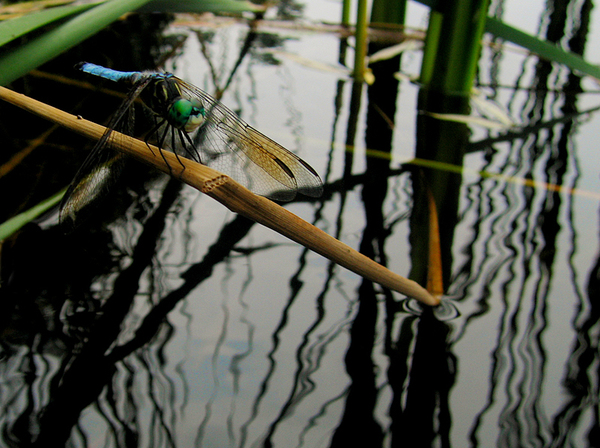 Dragonfly_1_1