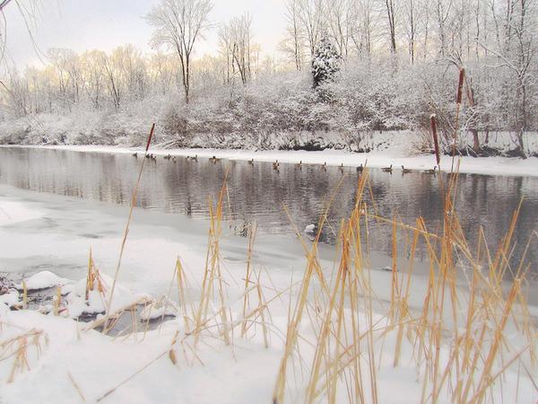 Snowstormgeese_1